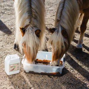 Tiermoor für Pferde